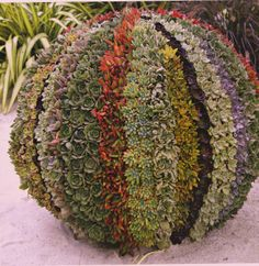 LOVE this idea! colorful succulent ball.