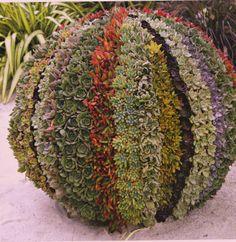 diy colorful succulent ball.