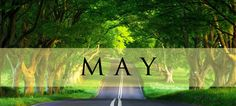 """What's Around the Curve?  A Sneak Preview at May 2016 """"Must Read"""" New Releases -- Some of the Best of the Best May Books to add to your TBR list.   From Southern, Medical, Legal, Suspense, Domestic, Crime,  Psychological, and Mystery Thrillers.   Gearing up for Spring Break, Memorial Weekend,  and Early Summer Beach Reads?  What a line up and bright sunny covers:   Chick-lit, women's fiction, historic, and literary titles --To keep you entertained for hours on end!"""