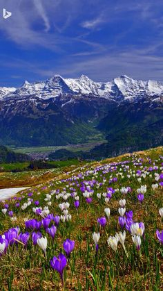 Spring in the mountains...