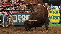 Professional Bull Riders - Asteroid