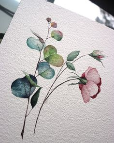 Imágenes efectivas que ofrecemos sobre flores de acuarela rosa Una imagen de calidad . - Imágenes efectivas que ofrecemos sobre flores de acuarela rosa Una imagen de calidad puede decirle - Watercolor Plants, Watercolor And Ink, Watercolor Illustration, Watercolor Paintings, Watercolors, Watercolor Portraits, Floral Illustrations, Art Sketchbook, Botanical Art