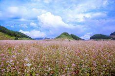 Tháng 12 có những loài hoa nào khoe sắc - Thế giới đó đây Mountains, Nature, Travel, Naturaleza, Viajes, Destinations, Traveling, Trips, Nature Illustration