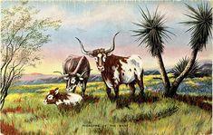 Vintage Western Postcard  Pioneers of the West  Cowboy