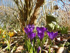 Frühlingserwachen - Bitte schnell