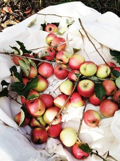 Apples Stimulate saliva which reduces tooth decay by lowering bacteria levels Prevent brain from aging Decreases risk of cancer Decrease risk of diabetes High in Fiber and Vitamin C Healthy heart Detox liver Prevent Cataracts Traces of Vitamin A, B6, magnesium, iron and calcium