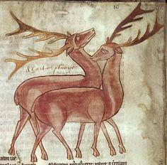 Medieval Bestiary : Stag Gallery  Fitzwilliam Museum, MS 254, Folio 10r