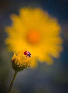 121clicks.comSimply Stunning Macro Photography by Vyacheslav Mishchenko - 121Clicks.com