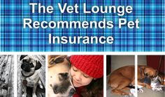 The Vet Lounge recommends pet insurance to protect your pet and yourself. Veterinary Services, Pet Insurance, Clinic, Your Pet, Lounge, Baseball Cards, Pets, Airport Lounge, Lounge Music