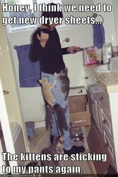 Feeding the cats in the bathroom?