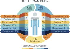 Do You Know the Elements that Make Up Your Body?: Most of the human body consists of water, which is made from hydrogen and oxygen.