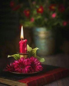 Happy Good Morning Images, Beautiful Good Night Images, Romantic Good Night, Cute Good Night, Beautiful Nature Scenes, Beautiful Gif, Beautiful Morning, Beautiful Flowers, White Roses Wallpaper