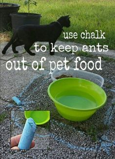 Useful Life Hacks To Get Rid of Pests The chalk works! I tried this yesterday around the dog bowls and some wooden posts the ants were trying to call home.repelled the ants and it was pretty neat to watch too. Useful Life Hacks, Life Hacks Game Mode, Dog Hacks, Pet Bowls, Dog Food Bowls, Useful Life Hacks, Cat Food, Dog Care, Dog Owners, Crazy Cats
