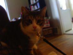 my kitty hunny