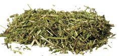Scullcap cut (Scutellaria lateriflora)