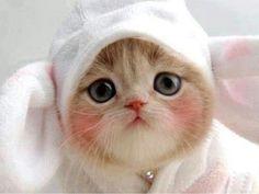 なんでも画像、私、かわいい?( ? _ ? )、可愛くてたまらないネコ写真♡