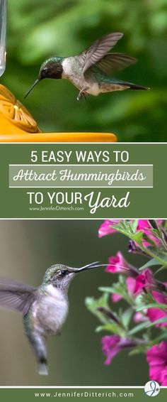 5 Easy Ways to Attract Hummingbirds to Your Yard by Jennifer Ditterich Designs
