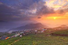 tea plantation sunset 茶園夕色 by Thunderbolt_TW, via Flickr