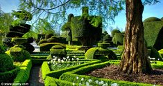 Levens Hall in Cumbria is famous for the topiary garden including a peacock and lion.
