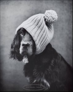 photograph dogs in hats