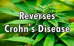 Marijuana Helps Reverse Woman's Crohn's Disease, Replaces Pharmaceuticals