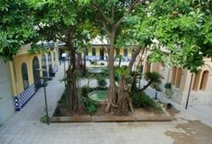 Patio del museo Valencia, Patio, Plants, Museums, Terrace, Porch, Planters, Plant, Planting