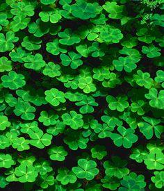 GROEN zit in het centrum van het kleurenspectrum en legt de relatie tussen een balancerende energie en gevoel van harmonie. Groen wordt verbonden met hout en symboliseert gezondheid en vitaliteit, welke kunnen verbeteren door groen toe te passen in het interieur, alsook groene planten en veel natuurlijke materialen zoals rotan, bamboe en onbewerkt hout. Groen is geschikt voor slaapkamers, eetkamers en keukens. Groen betekent geluk in het leven: niet rijkdom, wel relatie met familie en…
