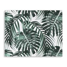 """Kavka Tropical Green Graphic Art on Wrapped Canvas Size: 16"""" H x 20"""" W x 2"""" D"""
