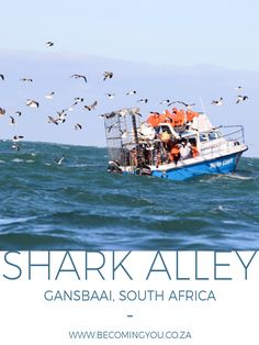 A visit to Shark Alley and Dyer Island with Marine Dynamics in Gansbaai, South Africa Semester At Sea, Shark Diving, Photography Pics, Fishing Villages, Africa Travel, Marine Life, Family Travel, South Africa, Traveling By Yourself