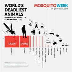 GMOS KILLING ANIMALS - Ecosia
