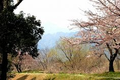 菰野町大羽根園地区  大羽根園公園付近  平成24年4月9日撮影