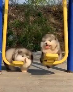 Funny Animal Faces, Funny Animal Videos, Cute Funny Animals, Cute Baby Animals, Funny Cute, Animals And Pets, Dog Videos, Hamsters, Malamute Puppies