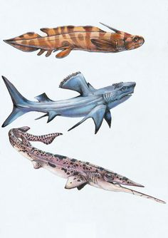 WEIRD SHARKS I (weird and wonderful sharks from the Bear Gulch Formation of Nevada) by ~SharkeyTrike @ deviantART http://sharkeytrike.deviantart.com/