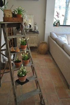 ラダー(はしご)を使えば、場所も取らずにたくさんの観葉植物を並べることができます。ラダーの色やアンティーク具合にこだわる楽しみも増えますよ。