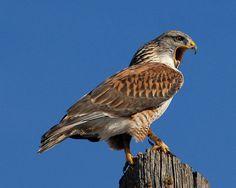 In Photos: Birds of Prey
