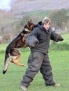 35 Best German Shepherd Puppies images in 2018   German