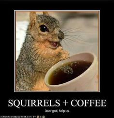 Morning coffee at the Squirrel Farm.