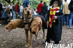 Harry Potter & Fluffy Kostüm - Webfail