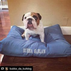 From @bubbz_da_bulldog ・・・ My New K9 Ballistics Tuff Bed#k9ballistics #k9ballisticsbed #TheBulldogWorld #Bulldogsofinstagram #AKC #EnglishBulldog #iGBulldogs #Bulldog #EnglishBulldogsOfInstagram #EnglishBulldogLovers #PetsOfInstagram #SoCaliBullies #DogsOfInstagram #iGbulldogs_Worldwide #Igbulldogs_NorCal #EnglishBulldogstagram #iLoveEnglishbulldogs #EnglishBulldogPuppy #DogOfTheDay #BulldogLove #BritishBulldog #iLoveBulldog  Check out more dog beds at: http://k9ballistics.com