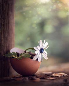 Wallpaper Nature Flowers, Beautiful Landscape Wallpaper, Beautiful Flowers Wallpapers, Pretty Wallpapers, Flowers Nature, Flower Wallpaper, Flor Iphone Wallpaper, Rainy Wallpaper, Rose Flower Pictures