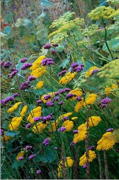 My Favorite Plant Combinations 3
