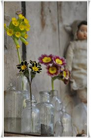 Schunsland (tuin-rozen-vintage en handwerk ): Primula's.....