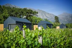 Gîte 2 - Farm stays for Rent in western cape FRANSCHHOEK