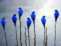 Blue bird flowers.