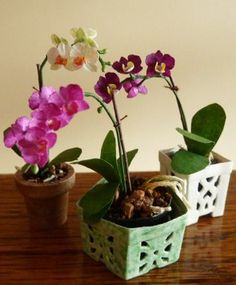 Le orchidee in vaso – Potted orchids Potted Plant Centerpieces, Minis, Indoor Flowers, Mini Plants, Miniature Plants, Miniture Things, Diy Doll, Flower Tutorial, Flower Making
