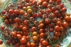 Pomodorini, Ragusa, Sicily. Photo: Julia della Croce Italy, Vegetables, Food, Italia, Essen, Vegetable Recipes, Meals, Yemek, Veggies
