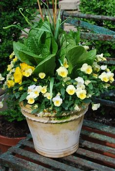 Pale yellow violas with a brilliant green contrast of Romaine lettuce.