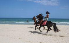 Photo by Ivana Piskáčková Mammals, Equestrian, Camel, Horses, Vacation, Beach, Vacations, The Beach, Horseback Riding