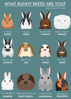 heyyyy my zodiac sign is virgo and i have a mini lop bunny!, animals heyyyy my zodiac sign is virgo and i have a mini lop bunny! Mini Lop Bunnies, Pet Bunny Rabbits, Cute Baby Bunnies, Pet Rabbit, Mini Rex Rabbit, House Rabbit, Holland Lop Bunnies, Bunny Bunny, Dutch Rabbits