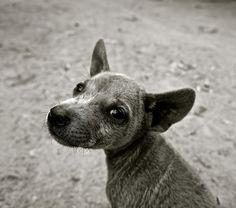 """""""Caltanissetta, crudeltà contro gli animali: cane legato ad auto e trascinato fino alla morte"""""""